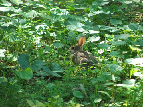Bunny in our garden (c) Katrien Vander Straeten