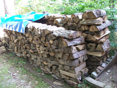 Woodpile 16 July 2008 (c) Katrien Vander Straeten