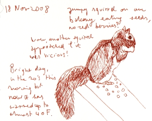 naturejournalsquirrel11