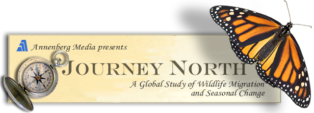 journeynorthheader102007
