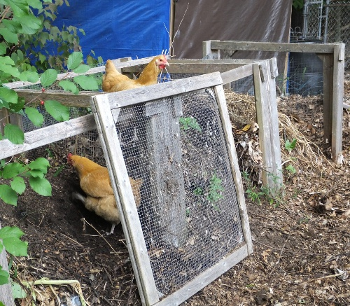 They found the compost bins!