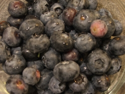 photo of blueberries for One Local Summer #3 (c) Katrien Vander Straeten