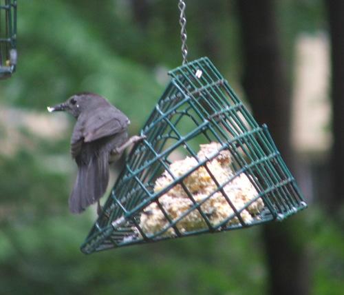 Bird (?) at Homestead, June 2008 (c) Katrien Vander Straeten
