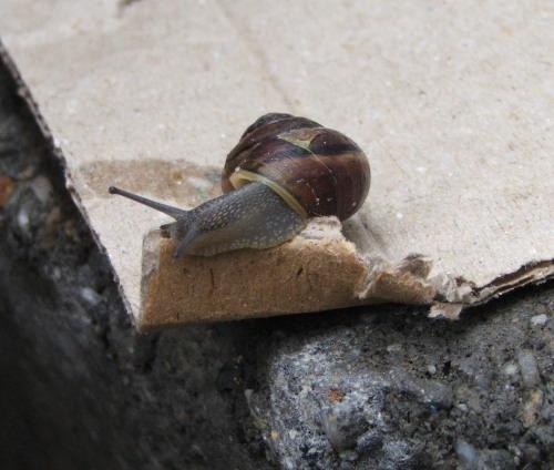 Snail June 2008 (c) Katrien Vander Straeten