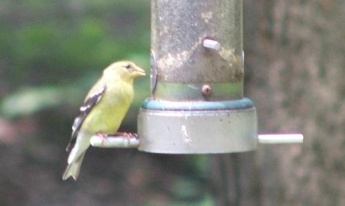 At the birdfeeder (c) Katrien Vander Straeten