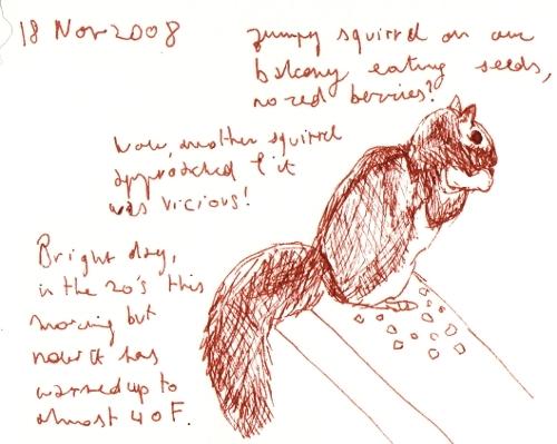 naturejournalsquirrel11