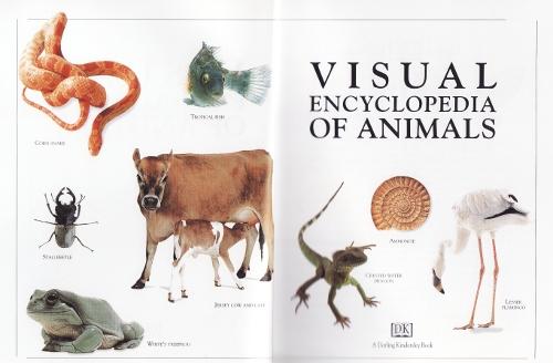 visuelencyclanimals1