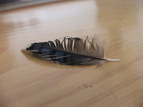 feather3257172248_297c04b74d